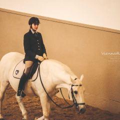 Spanish Riding School User Photo