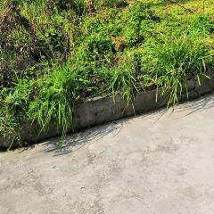 신바시 연무장 여행 사진