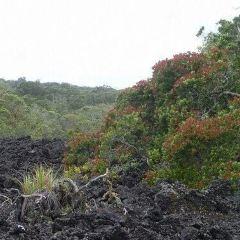 Rangitoto Island User Photo