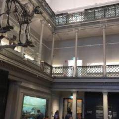 耶爾辛博物館用戶圖片