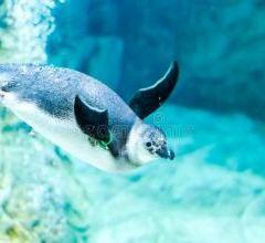 熱那亞水族館用戶圖片