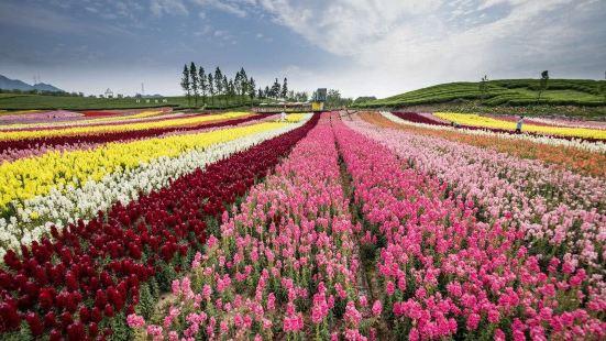 Fenghuang Flower Sea