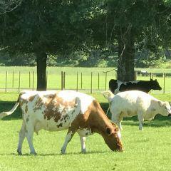 劍橋農莊用戶圖片