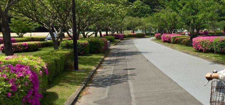 千波湖步行道3