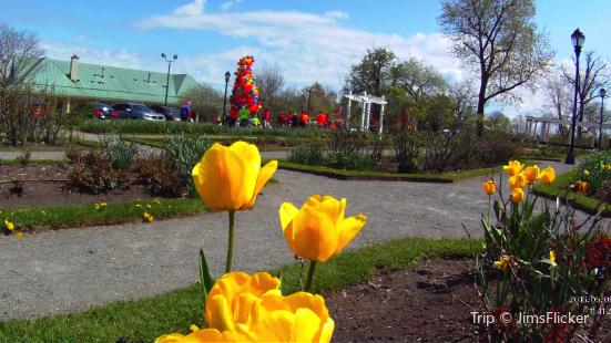 Delaware Park Rose Garden