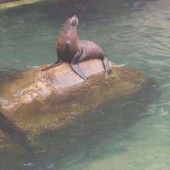 分界洲島+海豚表演用戶圖片
