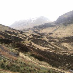 蘇格蘭高地用戶圖片