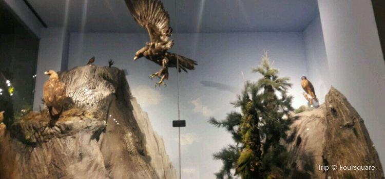 Museo de las Aves3