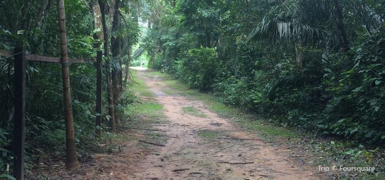 Horto Florestal2