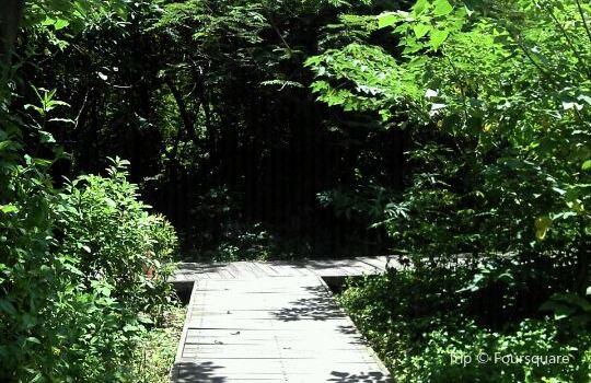 都市森林浴場1