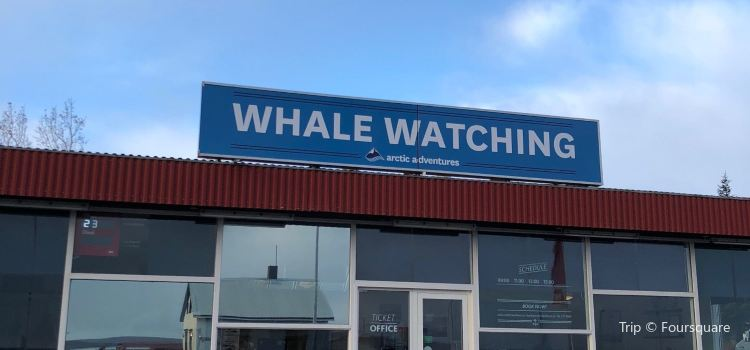 Arctic Sea Tours Whale Watching1