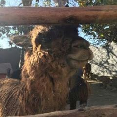 Alpaca Museum User Photo