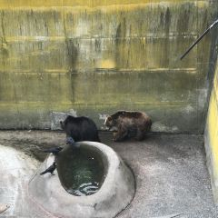 昭和新山熊牧場用戶圖片