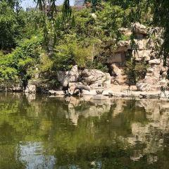 濰坊人民公園用戶圖片