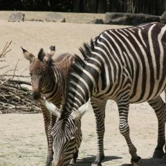 Zoo Hannover User Photo