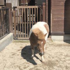 Hakodate Park User Photo