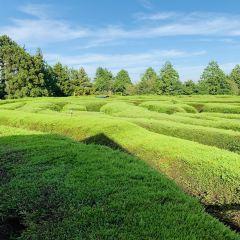 Maze Land User Photo
