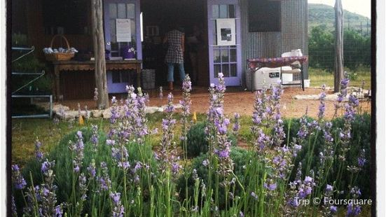 Hill Country Lavender Farm