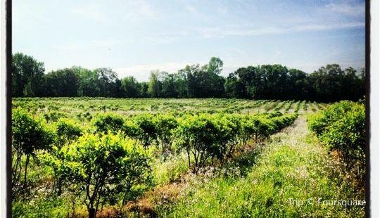 Nesbit Blueberry Plantation