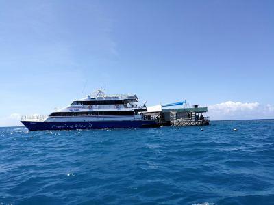 夢幻麗礁號大堡礁遊輪