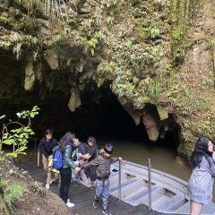 Waitomo Glowworm Caves User Photo