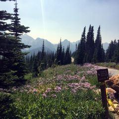 Mount Rainier National Park User Photo