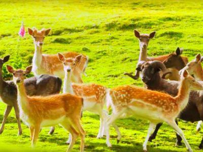 Staglands Wildlife Reserve