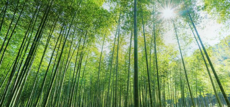 太華山省級森林公園