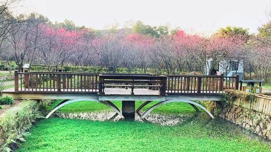 Cherry Blossom Valley