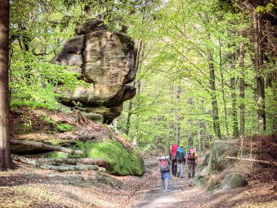 Saxon State Foundation Nature and Environment - National Park Center (Sächsische Landesstiftung Natur und Umwelt - NationalparkZentrum)