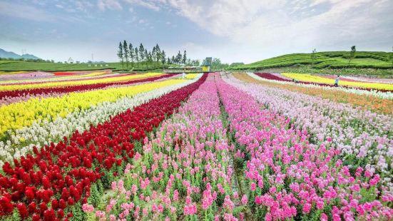 펑황 꽃바다