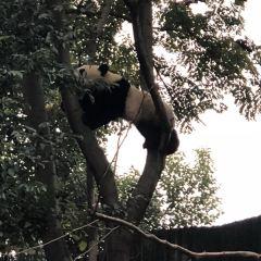 와룡 판다 자연 보호구 여행 사진