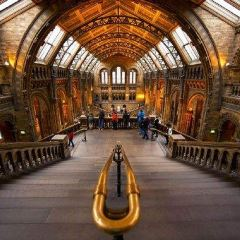 自然歷史博物館用戶圖片