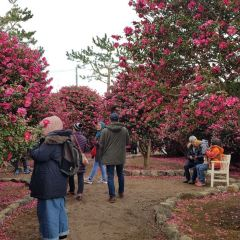 Camellia Hill User Photo