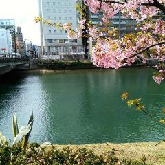 Peace Boulevard User Photo