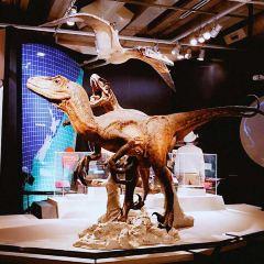 QT Museum Wellington User Photo