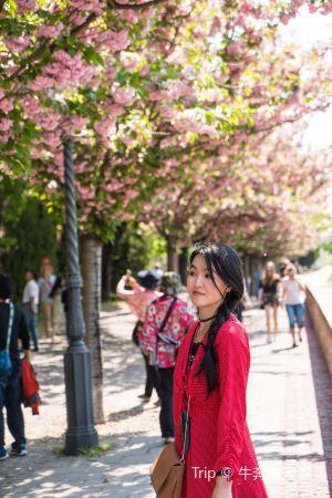 布達佩斯,一學就識拍攝技術