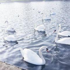 Canoe Lake用戶圖片
