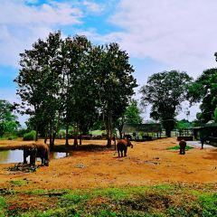 烏達瓦勒韋大象之家用戶圖片