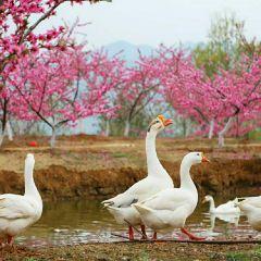龍崗公園用戶圖片