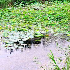 江苏微山湖湖滨湿地公园-沛县-苯墨子