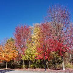 Fairy Lake Park User Photo