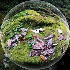 梵淨山生態植物園用戶圖片