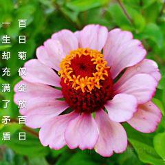 九蓮泉公園用戶圖片
