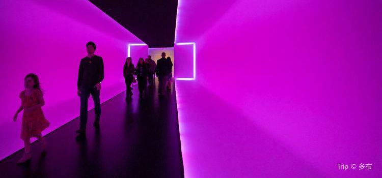 The Houston Museum of Fine Arts3