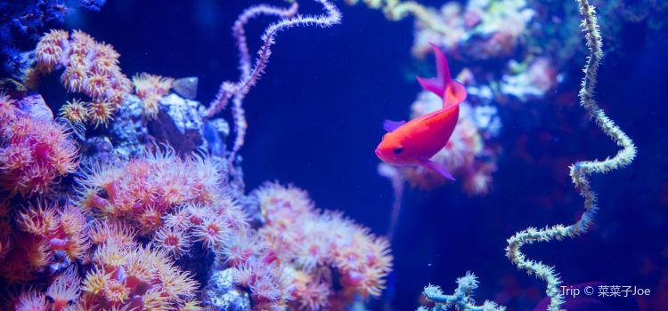 Seattle Aquarium1