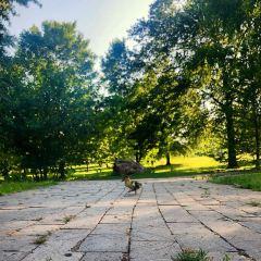 麥克亞瑟公園用戶圖片