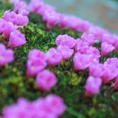 홍커우 자연보호구 여행 사진