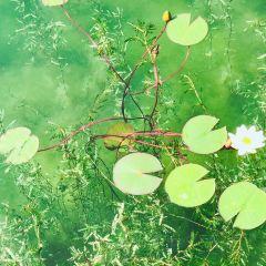 Fenghuangtai User Photo