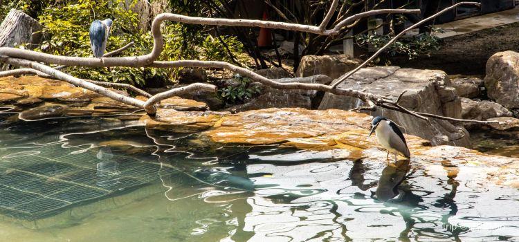 Tennoji Zoo1